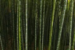 Foresta cinese della montagna Fotografia Stock Libera da Diritti