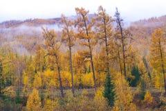 Foresta in collina immagini stock