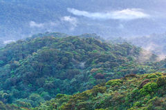Foresta in collina sette. Immagini Stock