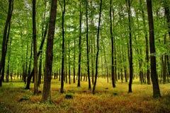 Foresta con alta erba Fotografie Stock