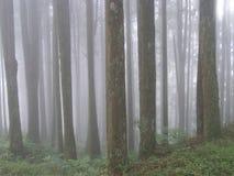 Foresta con fondo nebbioso Fotografia Stock Libera da Diritti