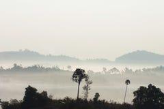 Foresta con foschia fotografie stock libere da diritti