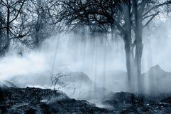 Foresta con fumo Fotografia Stock