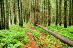 Foresta con gli alberi caduti Fotografie Stock