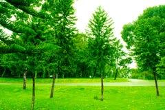 Foresta con gli alberi verdi fotografie stock