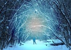 Foresta con gli sciatori della gente Fotografie Stock