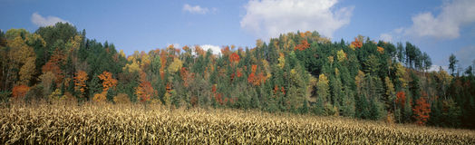 Foresta con il campo di cereale in autunno fotografie stock