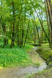 Foresta con il fiume al tramonto fotografia stock libera da diritti