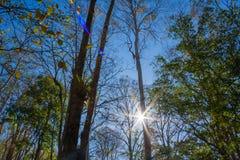 Foresta con il sole dietro immagine stock