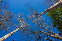 Foresta con il sole dietro Immagini Stock