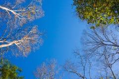 Foresta con il sole dietro Fotografia Stock