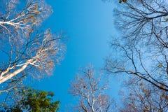 Foresta con il sole dietro Fotografie Stock Libere da Diritti