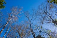 Foresta con il sole dietro Immagini Stock Libere da Diritti