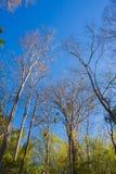 Foresta con il sole dietro Fotografia Stock Libera da Diritti