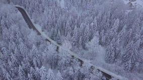 Foresta con la carreggiata nell'orario invernale stock footage