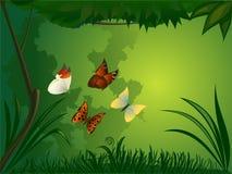 Foresta con la farfalla Fotografia Stock Libera da Diritti
