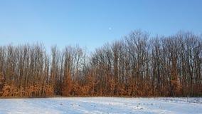 Foresta con la luna il giorno soleggiato con neve Immagini Stock