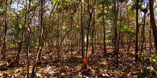 Foresta con le foglie cadenti fotografia stock libera da diritti
