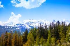 Foresta con le montagne svizzere strabilianti Fotografie Stock