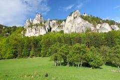 Foresta con le rocce. Immagini Stock Libere da Diritti