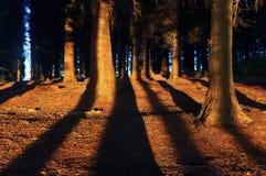 Foresta con luce solare ed ombre Immagine Stock Libera da Diritti