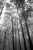 Foresta con nebbia all'autunno Immagini Stock Libere da Diritti