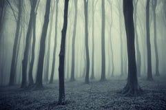 Foresta con nebbia dopo pioggia fotografia stock