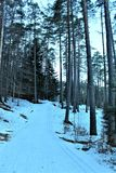 foresta con neve fotografia stock libera da diritti