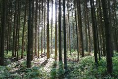 Foresta con sole Fotografia Stock Libera da Diritti