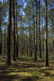foresta - concetto dell'ambiente Immagine Stock