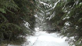 Foresta congelata stock footage