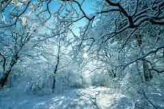 Foresta congelata Fotografia Stock Libera da Diritti