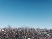 Foresta congelata Fotografie Stock