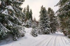 Foresta congelata Immagini Stock Libere da Diritti
