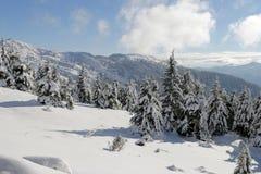 Foresta congelata Immagini Stock