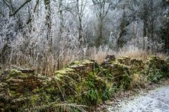 Foresta congelata con la parete verde Immagine Stock