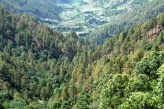 Foresta conifera Fotografia Stock Libera da Diritti