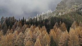 Foresta conifera nelle montagne Brina di mattina sugli alberi Primo hoarfrost immagini stock libere da diritti