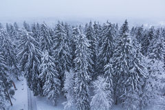 Foresta coperta di neve Immagini Stock
