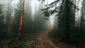 Foresta coperta in metraggio della foschia HD stock footage