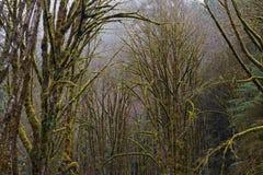 Foresta coperta in muschio II Fotografia Stock