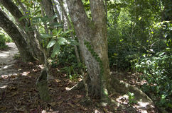 Foresta in Costa Rica fotografia stock