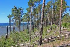 Foresta costiera, Saaremaa, Estonia Fotografia Stock Libera da Diritti
