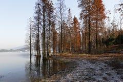 Foresta cremisi nella mattina di inverno dal lago Immagini Stock Libere da Diritti