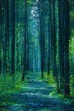 Foresta crepuscolare Immagine Stock