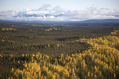 Foresta d'Alasca variopinta Immagine Stock