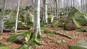 Foresta d'autunno archivi video