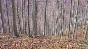 Foresta d'autunno video d archivio