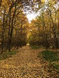 Foresta d'autunno Fotografie Stock