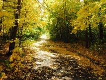 Foresta d'autunno Fotografia Stock Libera da Diritti